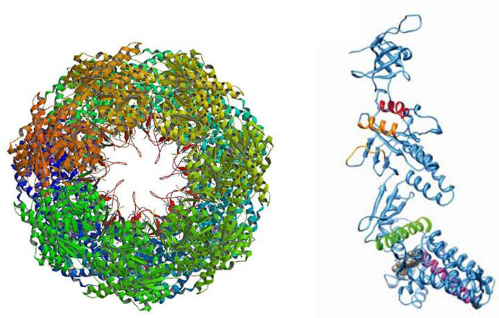 HSP60 Structure - Crystal structure of GroEL and GroES.