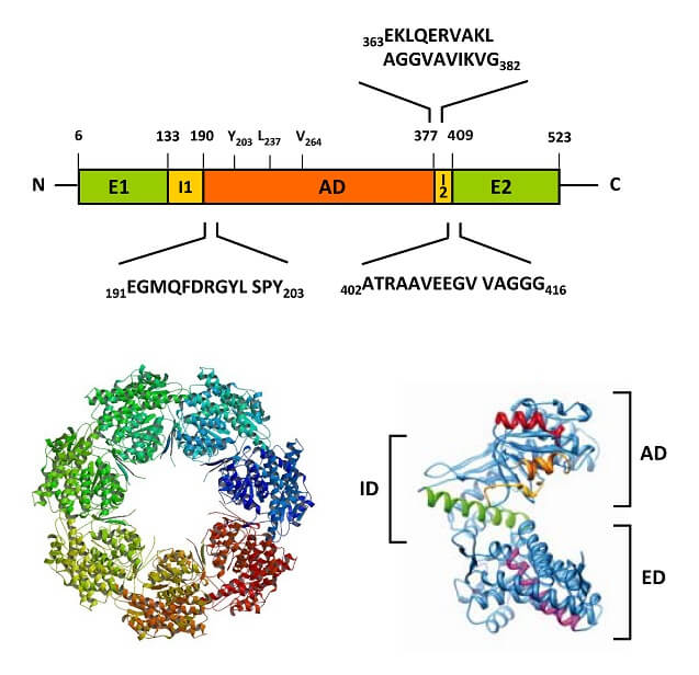 HSP60 structure - Structures of prokaryotic GroEL - figure 1